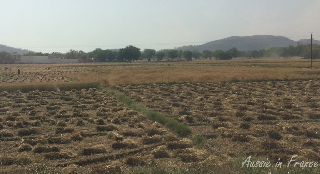 The somewhat desolate countryside btween Jaipur and Agra
