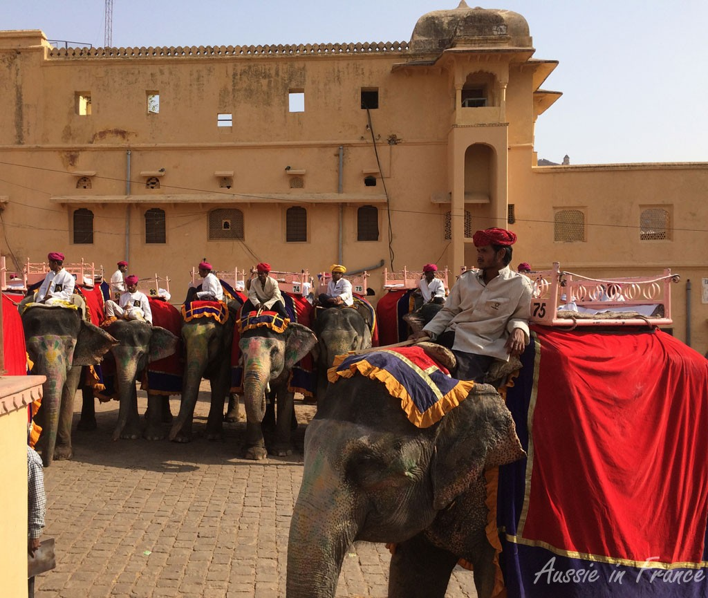 The elephants lined up to take their passengers up the hill to the Amber Fort