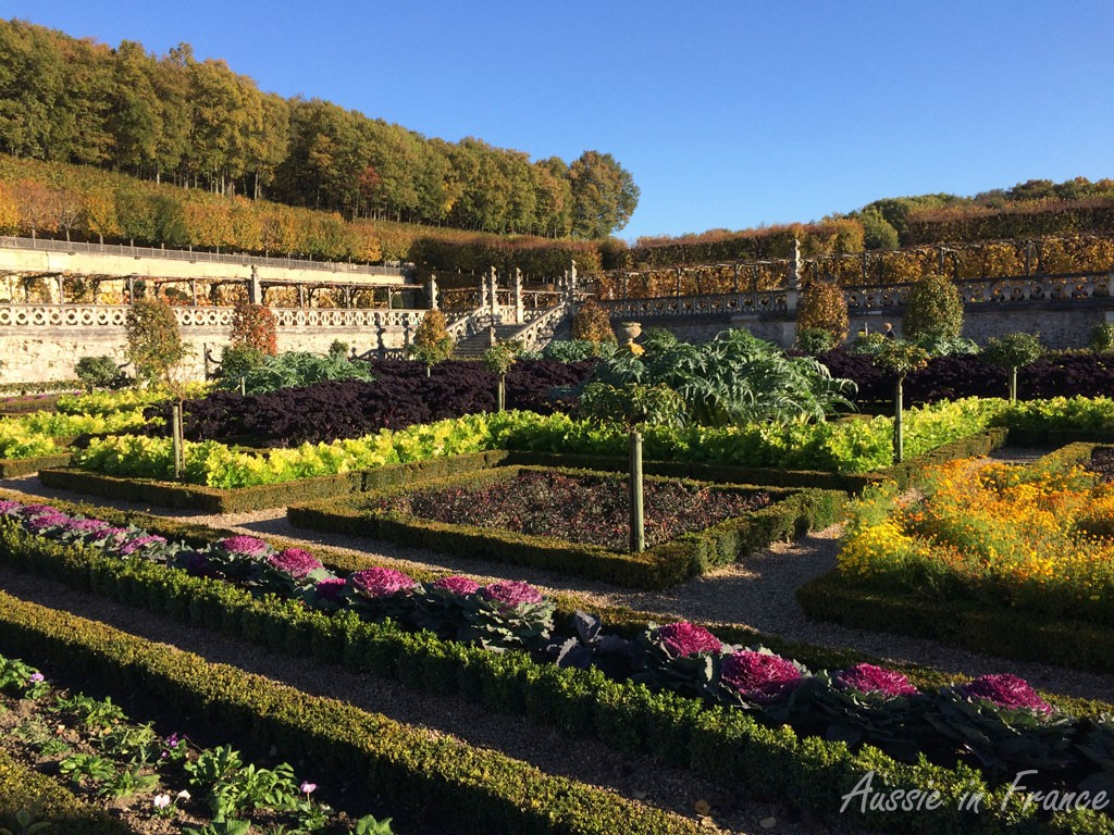 The vegetable garden in Villandry with its decorative cabbages