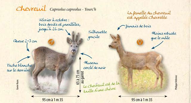 Source: www.gmb.asso.fr/PDF/Atlas/Cerf-Chevreuil.pdf