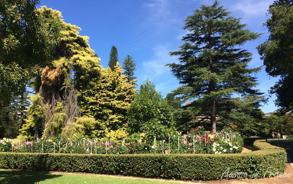 The amazing botanical gardens in Adelaide