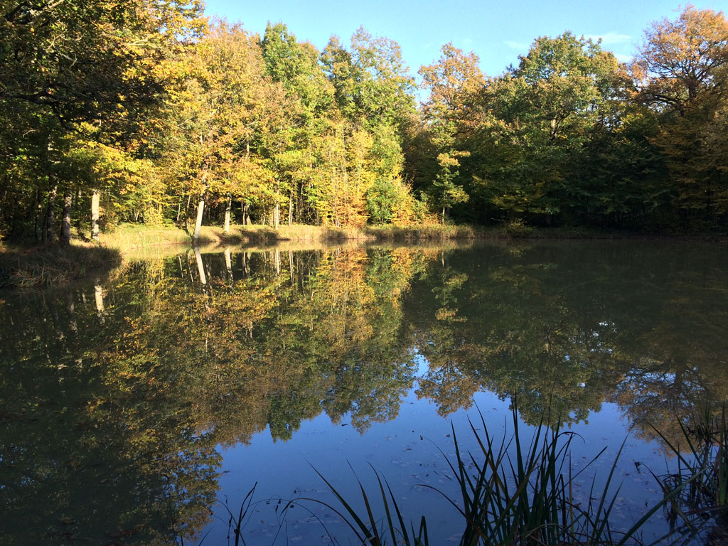 Autumn pond near Lancôme