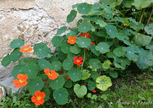 belle_plante