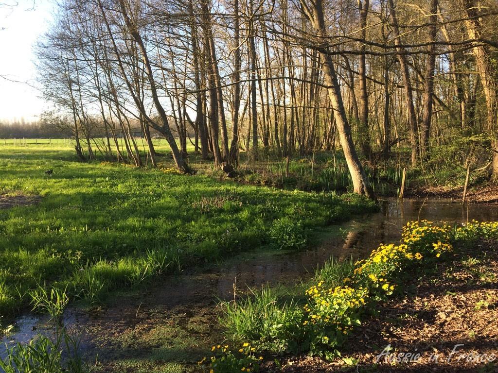 The bottom of Christelle and Olivier's garden
