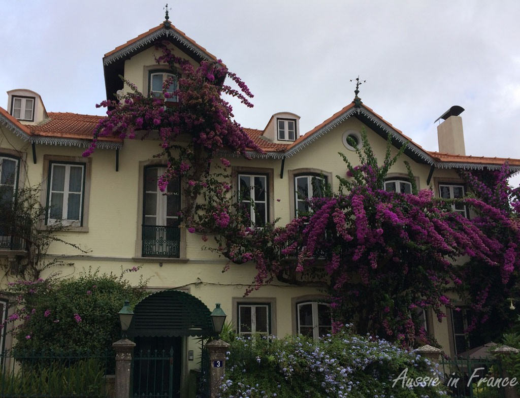 House with bougainvillea opposite our tea shop