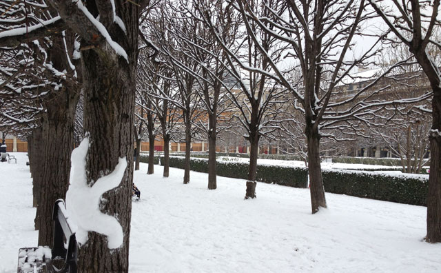 A snowbear climbing a tree in the Palais Royal gardens