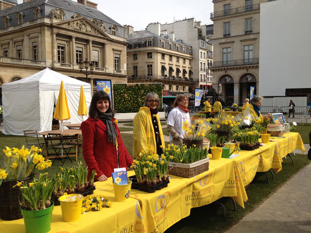 Curie Cancer Institute selling daffodils on Place Royale