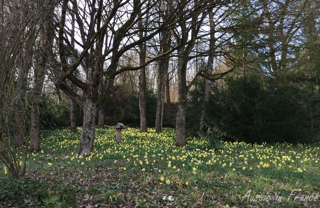 The daffodils planted by Mr and Mrs Previous Owner