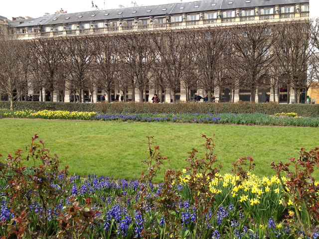 Jonquils and daffodils in the Palais Royal gardens