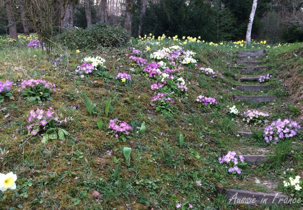 Daffodils and primroses in our little wood