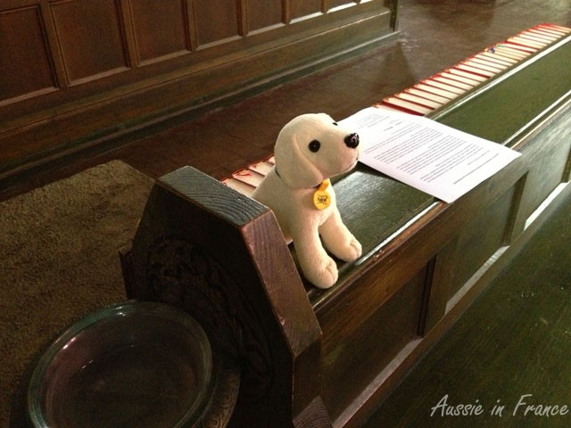 This dog was sitting on the end of a church pew