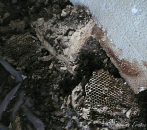 The hornets nest that fell out of the chimney stack in the bedroom fireplace
