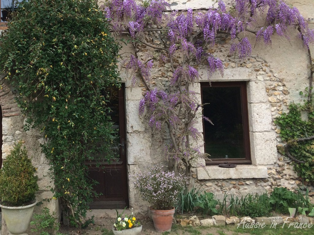The front window with its freestone surround looking its best with the wisteria in bloom