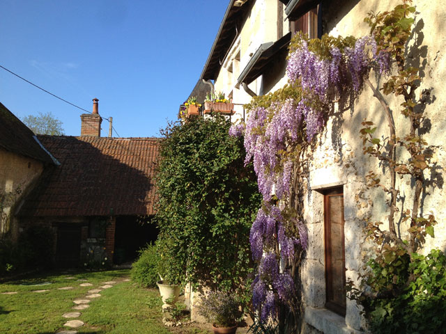 Our wisteria taken from the side, Jean Michel's favourite view