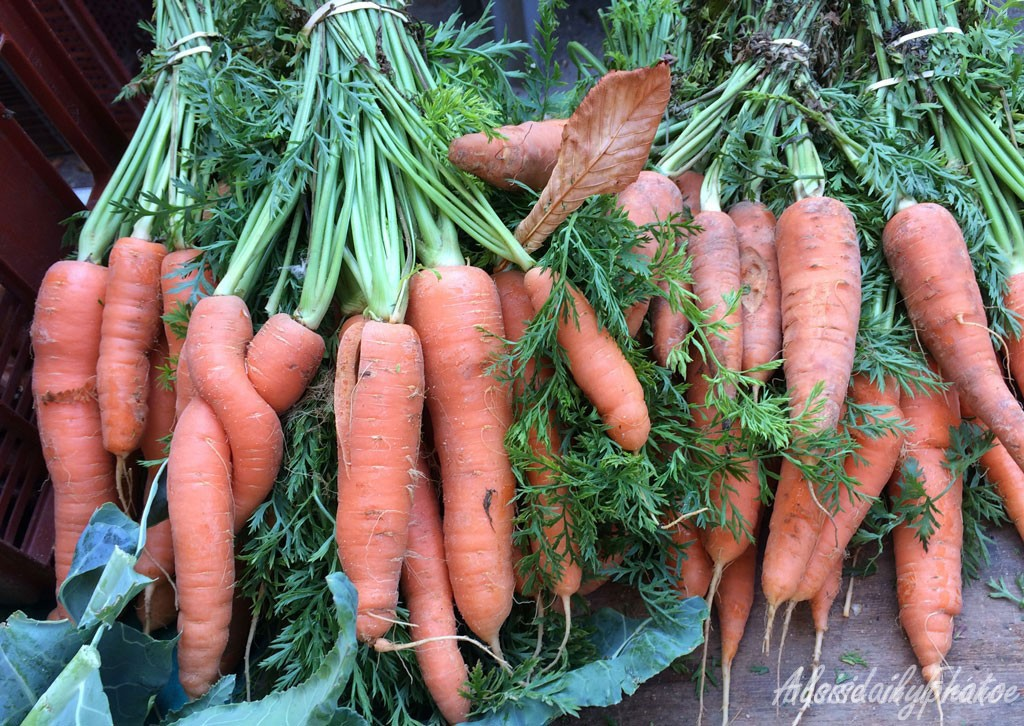 I know these lovey-dovey carrots aren't turnips but I don't have any turnip photos and I love this one!