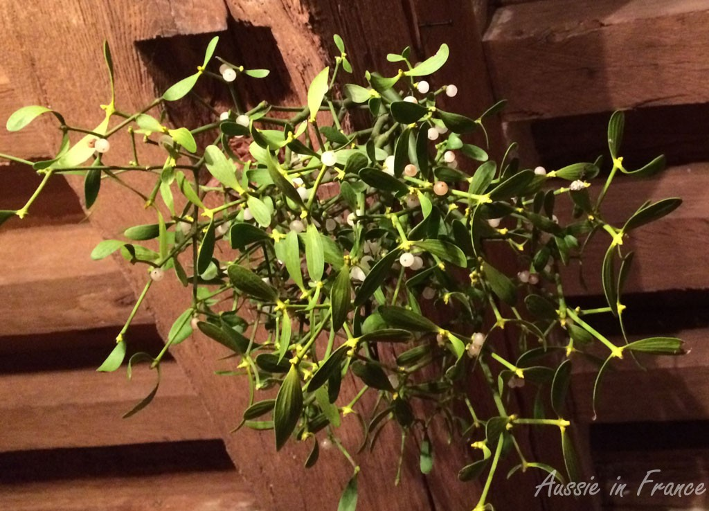 Our New Year mistletoe