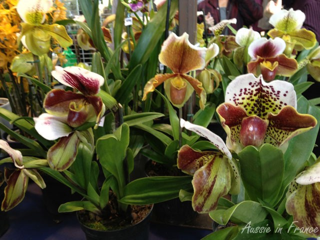 Cultivated orchids on display