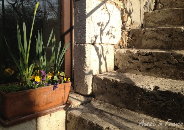 This photo was taken at the bottom of our front steps. The shadow is cast by our Pierre Ronsard climbing rose which is just starting sprout new leaves after being severely pruned in winter.