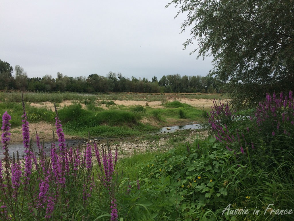 Purple flowers along the banks of the Loire