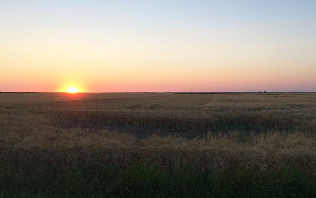 Sunset over the dry marshland