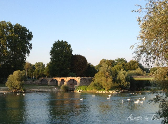Swans on the Marne