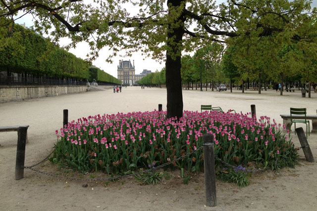 Tulips in the Tuileries with the Louvre in the background