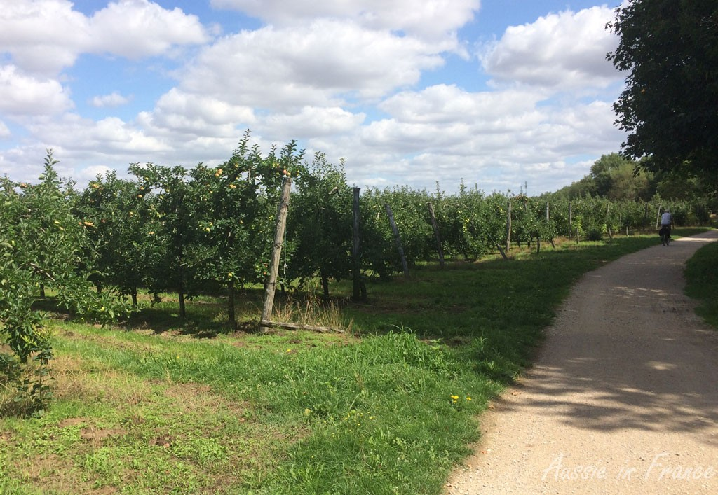 Vineyards along the cycle path between Beaugency and Meung-sur-Loire