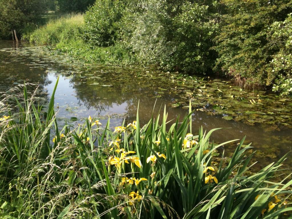 Waterlilies and irises in Chouzy-sur-Cisse